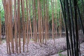 Prafrance bamboo garden