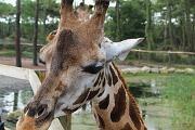 Zoo du Bassin d'Arcachon