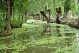 photo of Marais Poitevin
