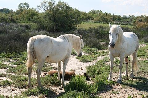 Photo de Camargue de Bouches-du-Rhone