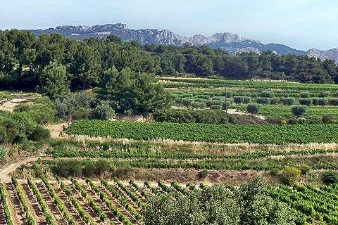 Photo of Dentelles de Montmirail in Vaucluse