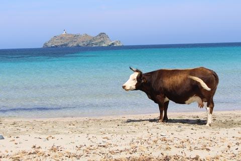 Photo of Rogliano in Corsica