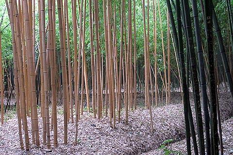 Photo of Prafrance bamboo garden (Languedoc-Roussillon region)