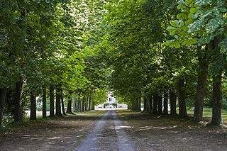Avenue des arbres et villa de Sées