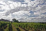 Vineyard proche de Bordeaux