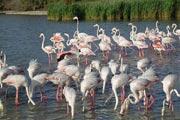 Camargue nature parc