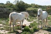 photo of Camargue