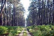 les forêts des Landes