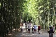 photo of Prafrance bamboo garden