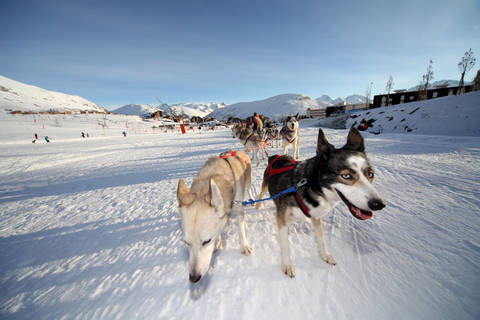 mushing in alpe d'huez