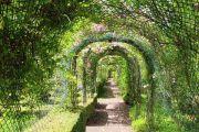 rose-arch