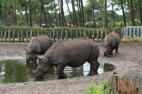 Indian Rhino's at Arcachon Zoo