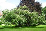 gardens-in-beze