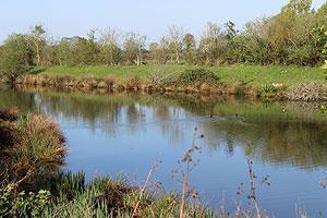 Parc régional de la Brenne au printemps
