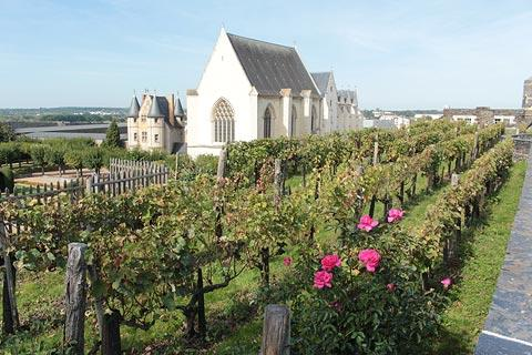 Vineyard on the ramparts of Angers Chateau