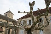 tree-and-church