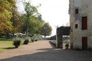 lavender-walkway