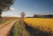 chatonnay-path-field