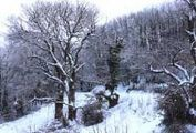 winter-scenery