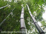 jardin-jungle-eu-1