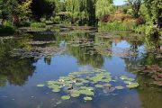 lily-pond2