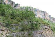 cliffs-trees