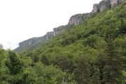 trees-cliffs