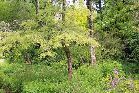 Trees and flowers in the Jardin de Liliane