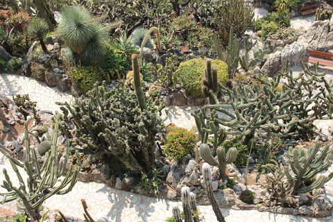 the jardin exotique de monaco an amazing garden with. Black Bedroom Furniture Sets. Home Design Ideas