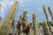 forest-cacti