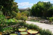 exotic-waterlilies