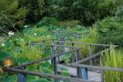 walkway-lotus