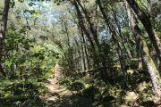woodland-art