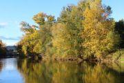 trees-along-river