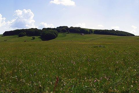 Plateau d'Aubrac