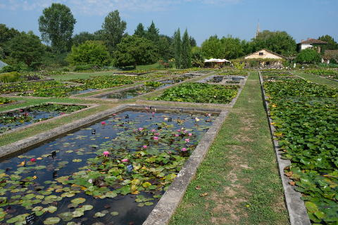 Latour Marliac waterlily nursery and garden