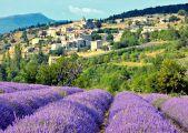 lavender-village