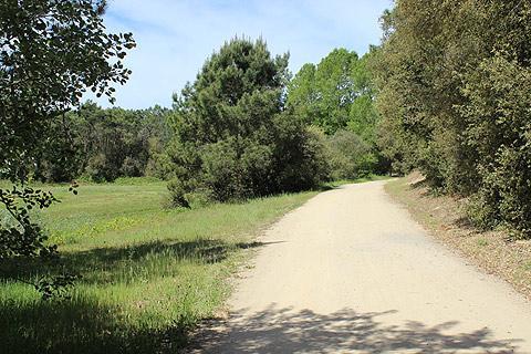 Forêt domaniale de Longeville