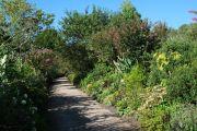 flowering-path