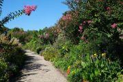 flowering-path1