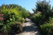flowering-path2