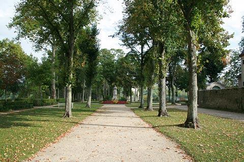 Les arbres du Parc Buffon