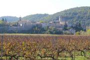 approach-through-vineyards