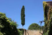 tree-in-wall