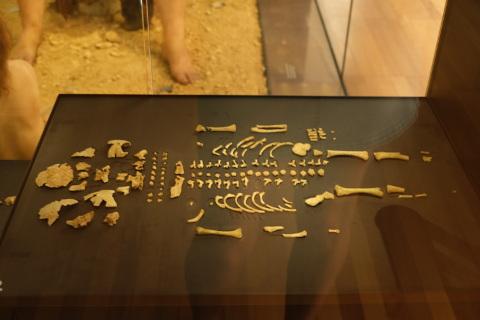 squelette de Le Moustier