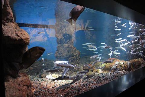Aquarium, Nausicaa