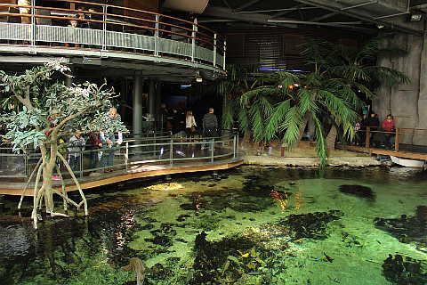 Lagoon bar, Nausicaa