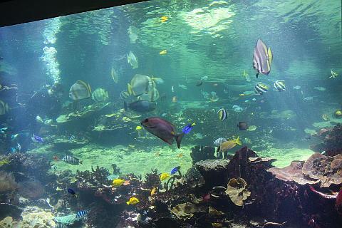 Observatoire sous-marin à Nausicaa