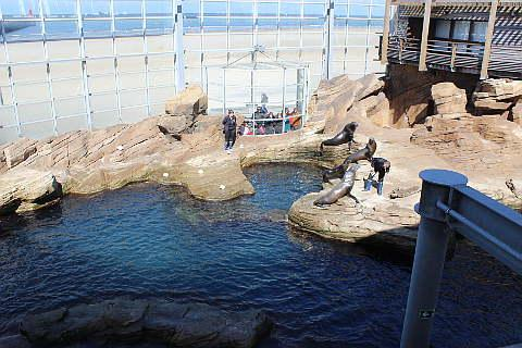 Californian sea lion reserve à Nausicaa
