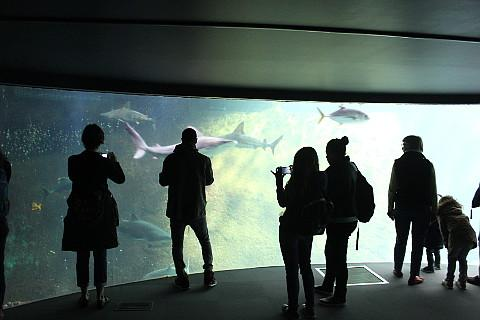 Shark tank, NAUSICAA